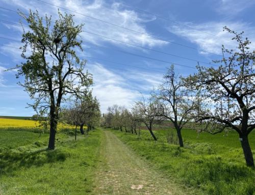 Obstbäume werden am 11.08. versteigert